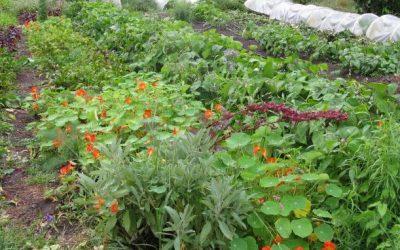 Organic Plant Sale