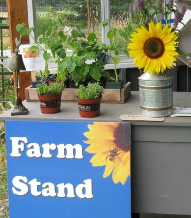Farm stand finale – Wednesday October 14