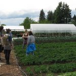 2016May03FarmtourNorthstarKale+Greenhouses