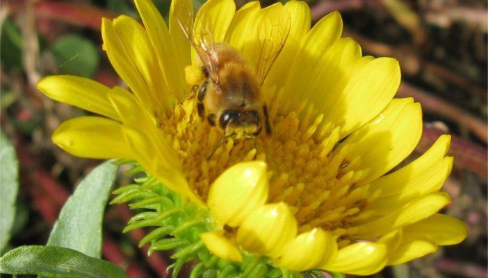 Pollinator Passion!