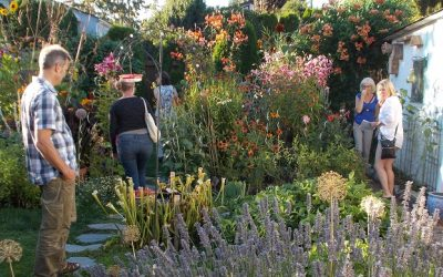 Urban Food Garden Tour – next week!