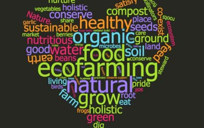 Spotlight on Sustainability: Haliburton's EcoFarm School