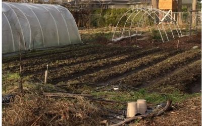Spring into EcoFarming at Haliburton Farm