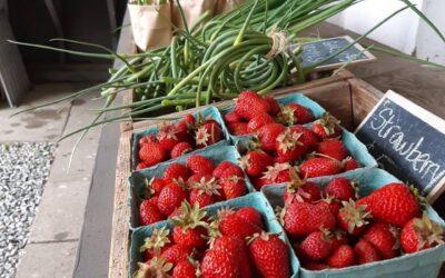 Farmstand is Open: Thursdays!