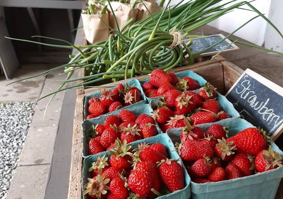 Farmstand is Open: Thursdays!