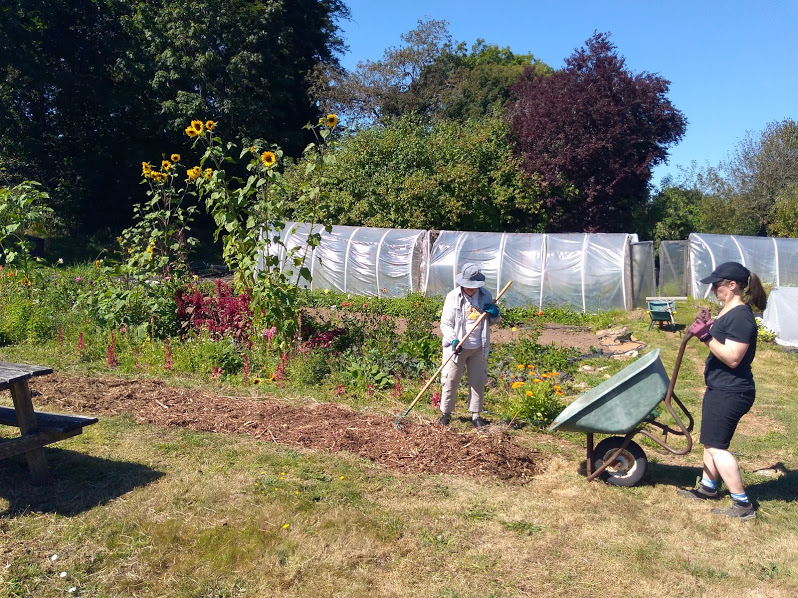 Upcoming farm work party Sunday Sept 13: pruning, seed saving…