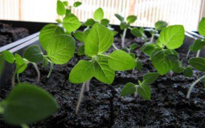Winter Plant Starts!
