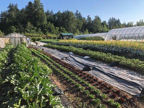 Organic farm plot available for lease at Haliburton Farm!